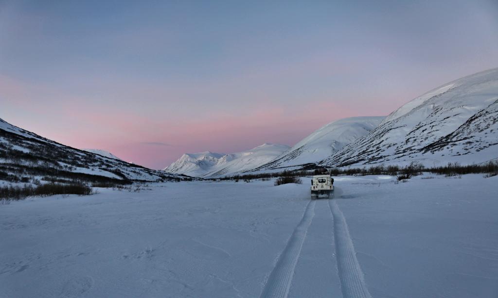 На Полярном Урале поселят снежных баранов
